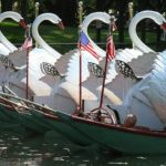 photo of swan boats